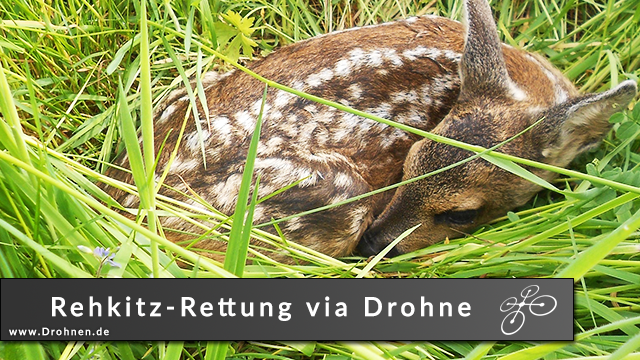 Rehkitz-Rettung mittels Drohne und Wärmebildkamera