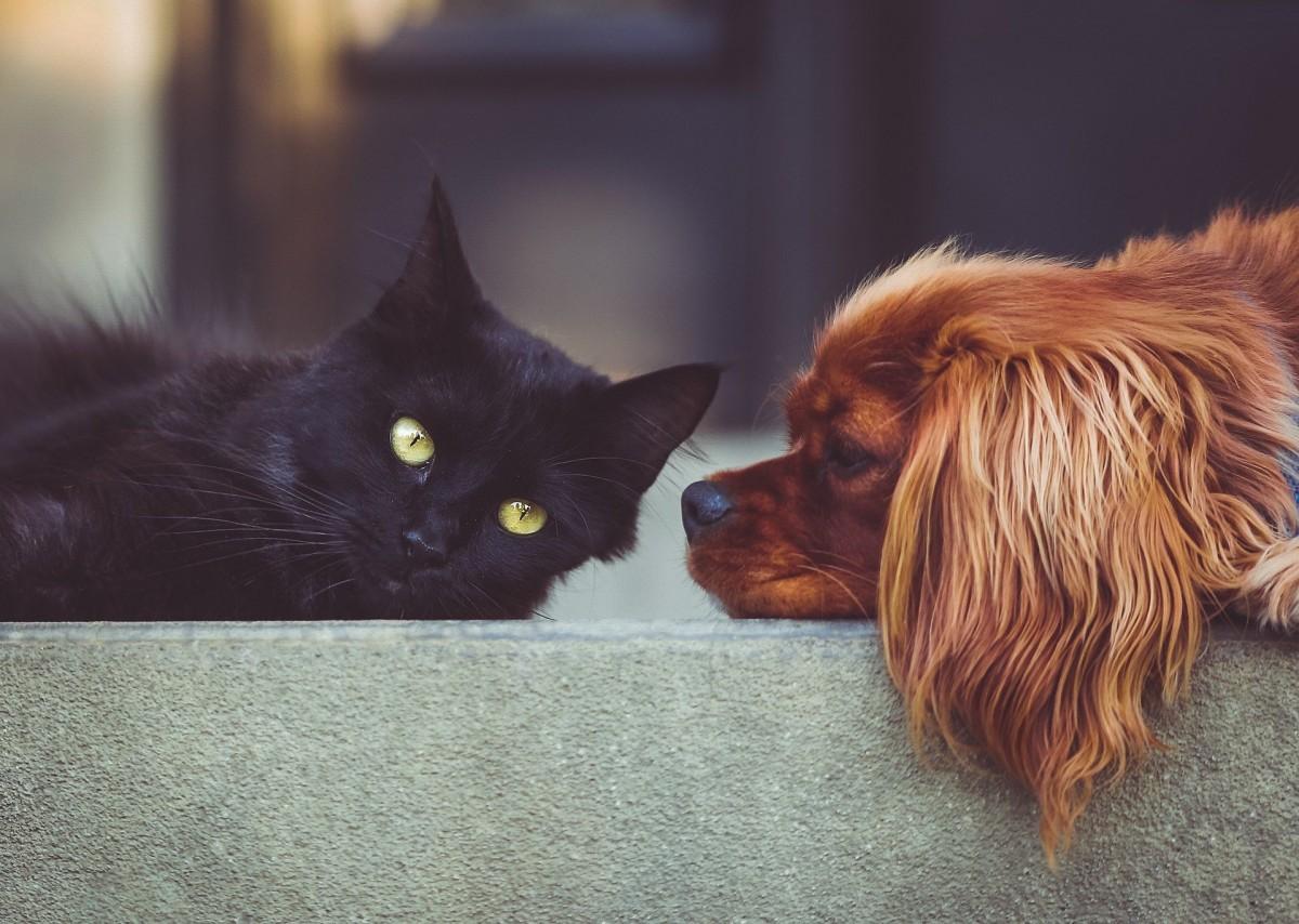 Haustiere – Hund und Katze